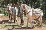 Horse back ride at Kaffa rain forest